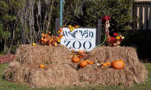 Gulf Coast Zoo all decorated for Autumn