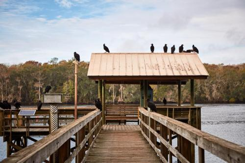 Vultures camping out on the pier